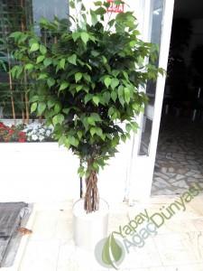 Yapay Benjamin Ağacı