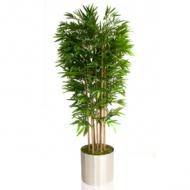 yapay_bambu