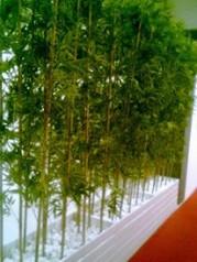 yapay bambu dekoru